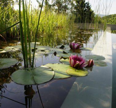 Biotop zwemvijver aanleggen